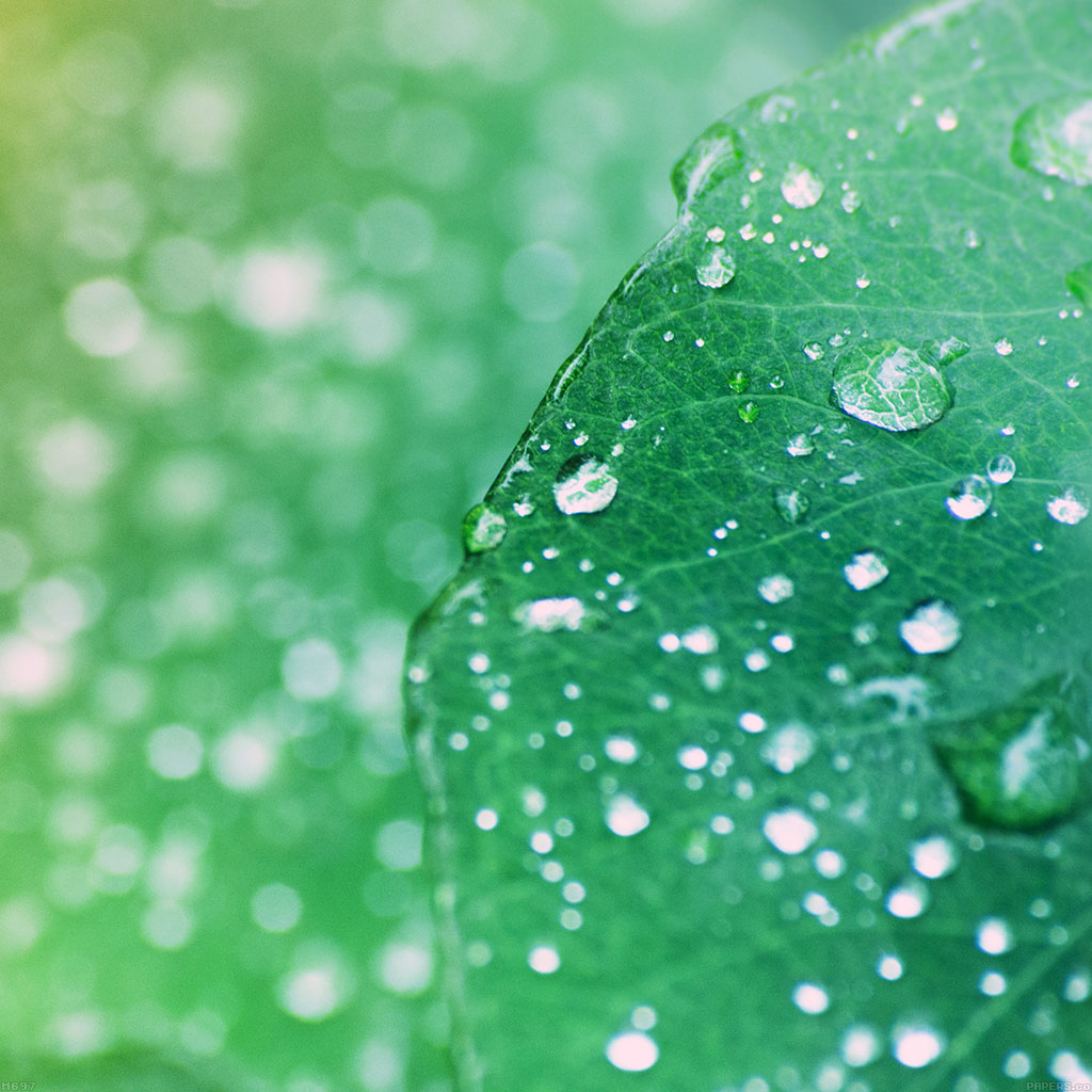android-wallpaper-mg97-oasis-leaf-rained-after-morning-nature-wallpaper