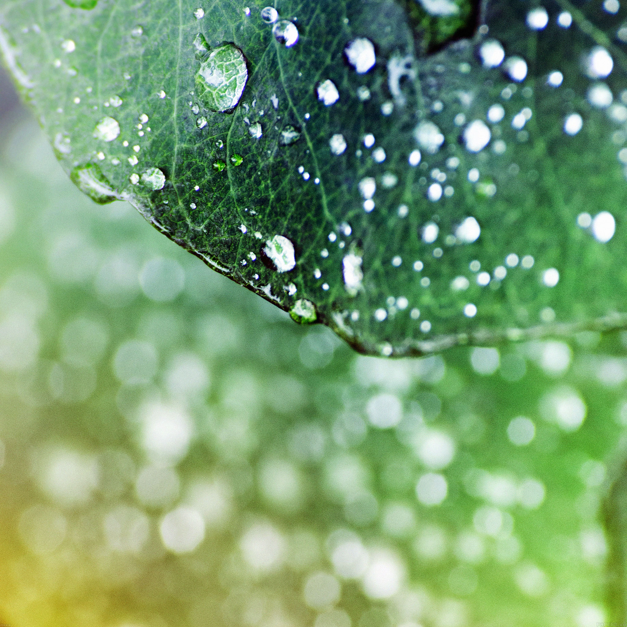 Androidpapersco Android Wallpaper Mh00 Oasis Leaf Dark Shiny