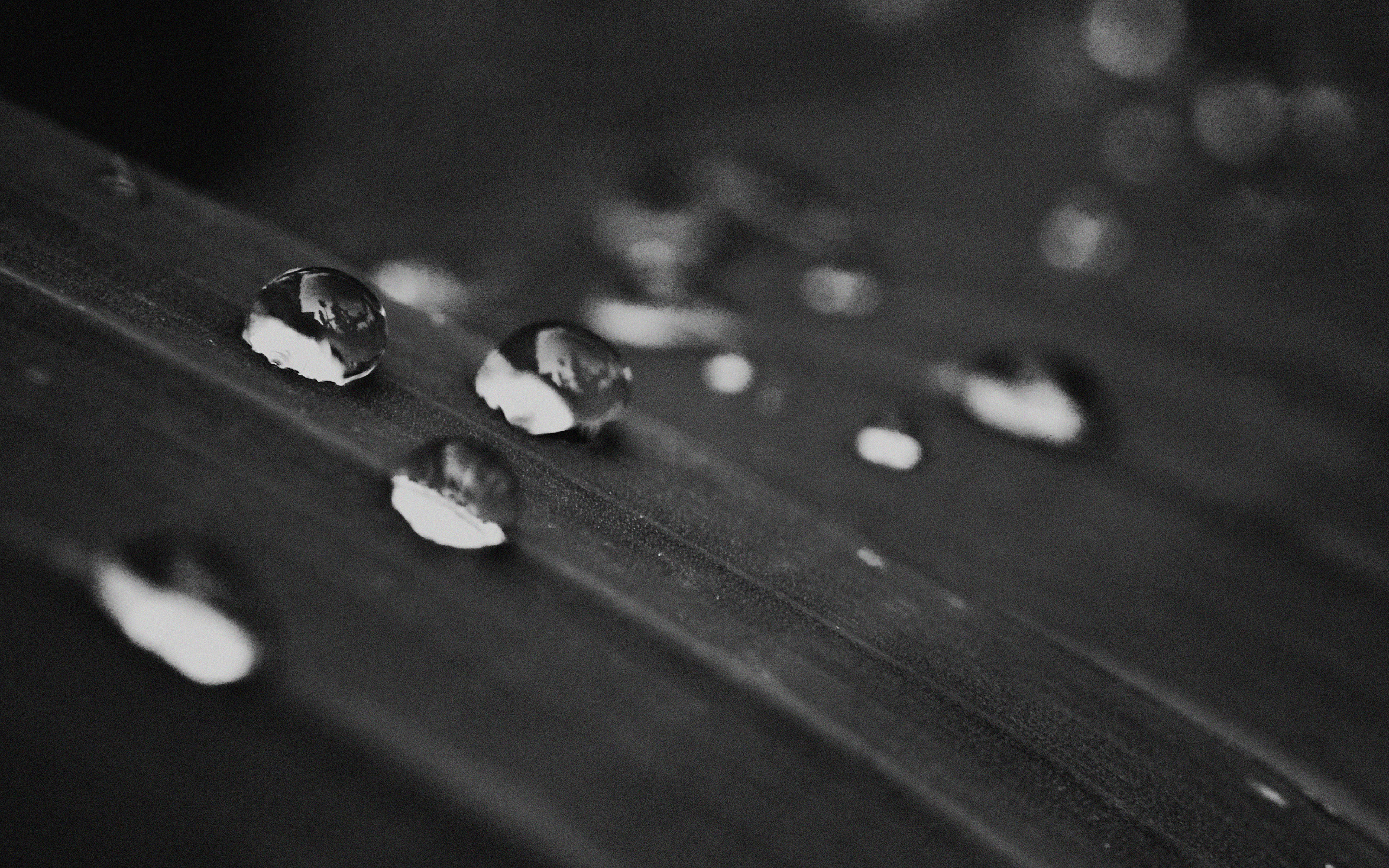 Mh11 Water Drops Nature Black Leaf After Rain Forest Wallpaper