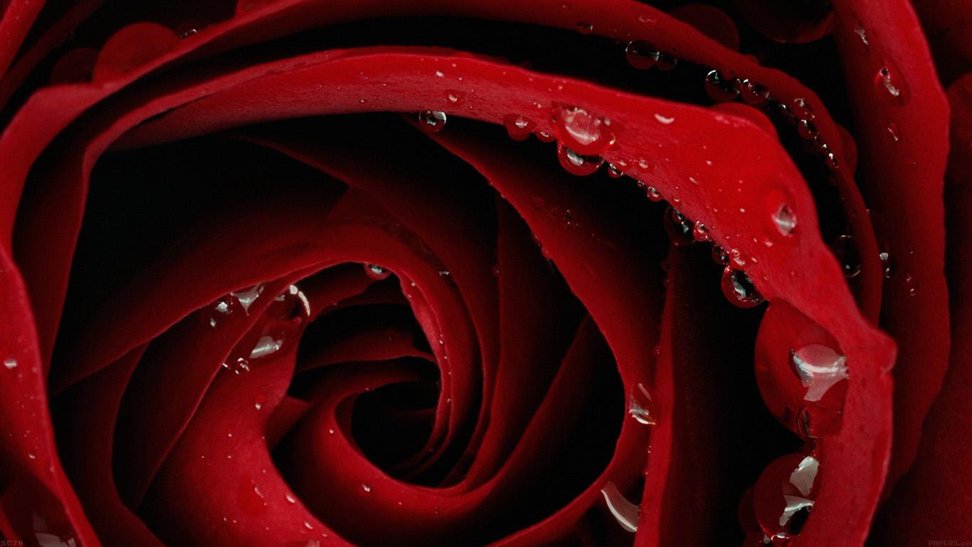 iPapers.co-Apple-iPhone-iPad-Macbook-iMac-wallpaper-mh81-beautiful-red-rose-flower-nature-wallpaper
