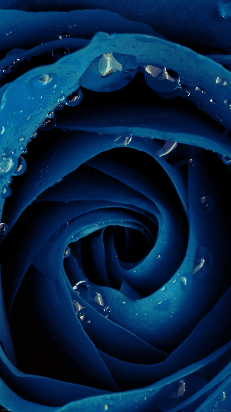 iPhonepapers.com-Apple-iPhone8-wallpaper-mh82-beautiful-blue-rose-flower-nature