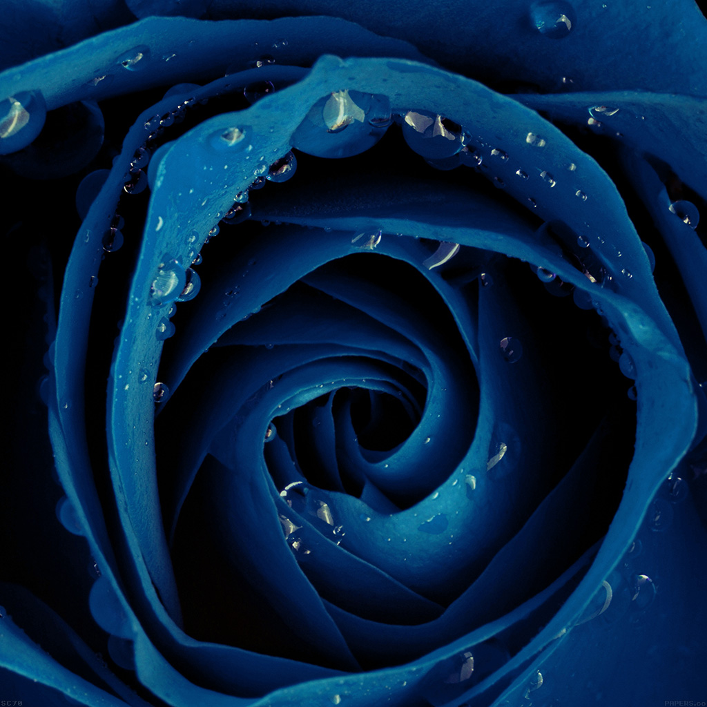 android-wallpaper-mh82-beautiful-blue-rose-flower-nature-wallpaper