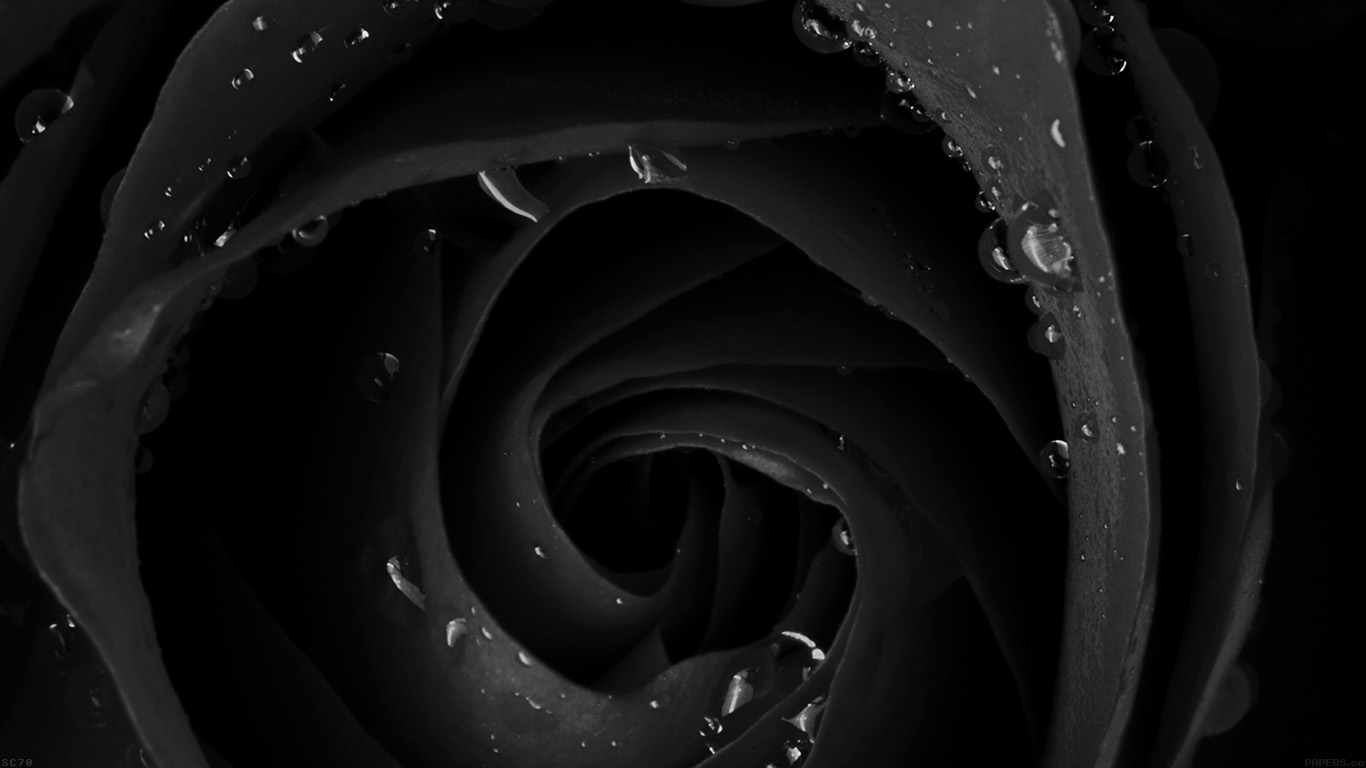 desktop-wallpaper-laptop-mac-macbook-air-mh83-beautiful-dark-rose-flower-nature-wallpaper