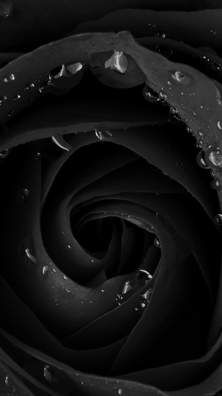 iPhone6papers.co-Apple-iPhone-6-iphone6-plus-wallpaper-mh83-beautiful-dark-rose-flower-nature