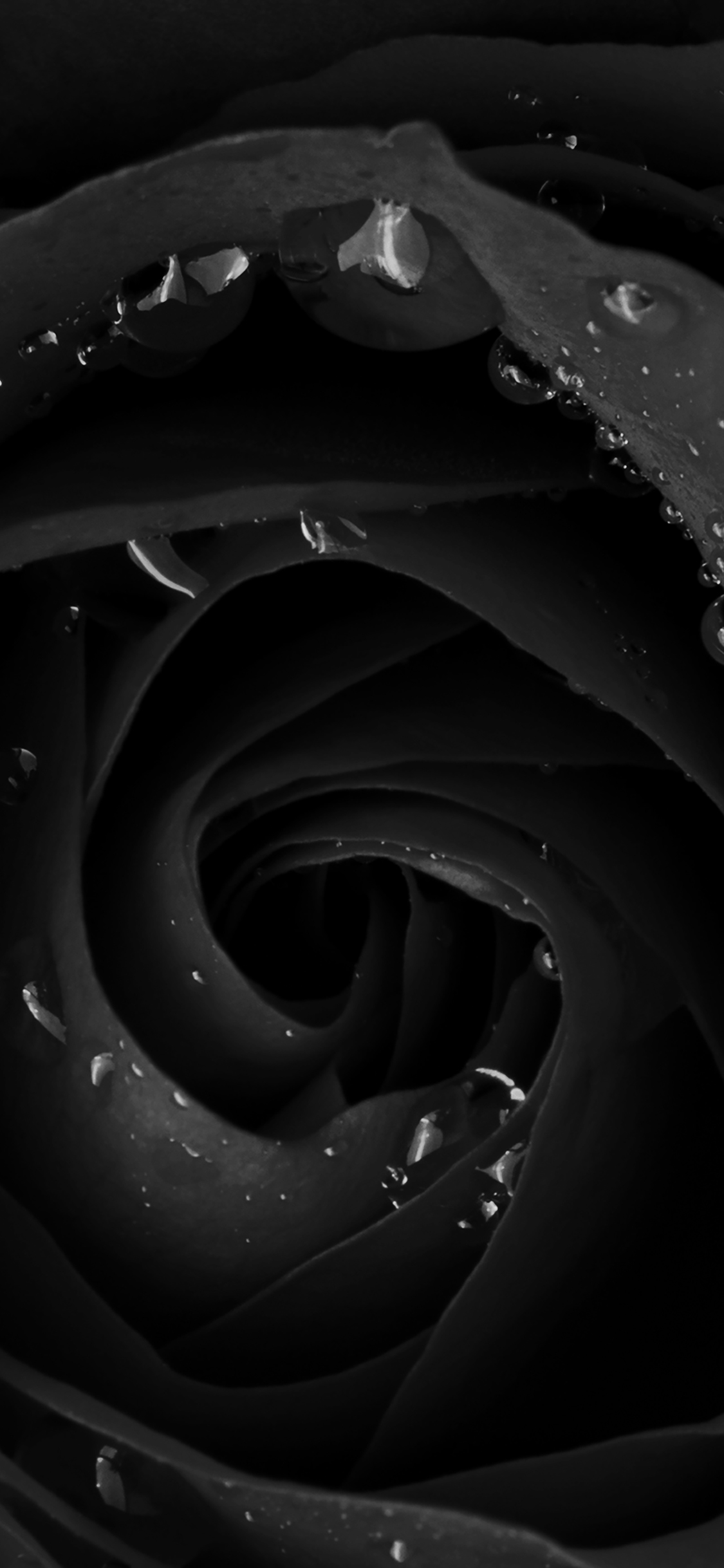 iPhoneXpapers.com-Apple-iPhone-wallpaper-mh83-beautiful-dark-rose-flower-nature