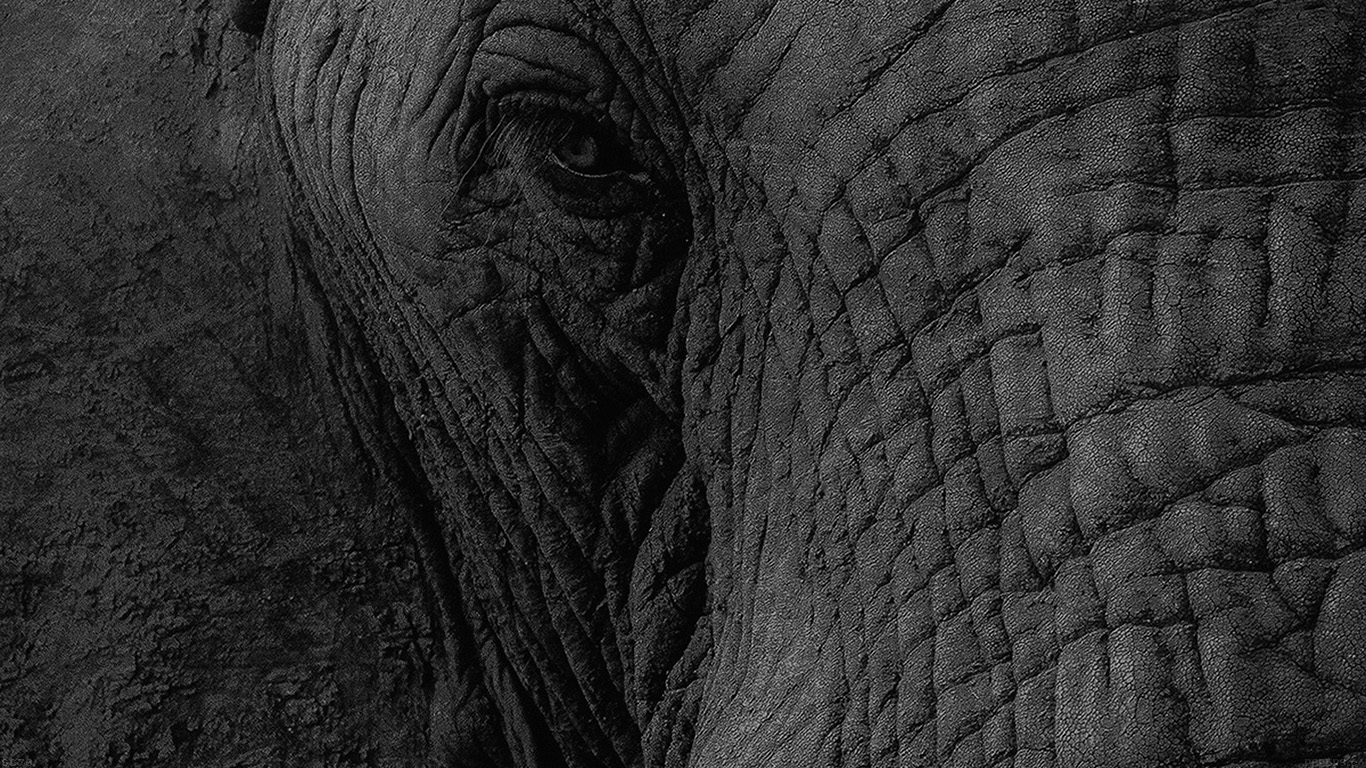 iPapers.co-Apple-iPhone-iPad-Macbook-iMac-wallpaper-mh89-elephant-eye-animal-nature-wallpaper