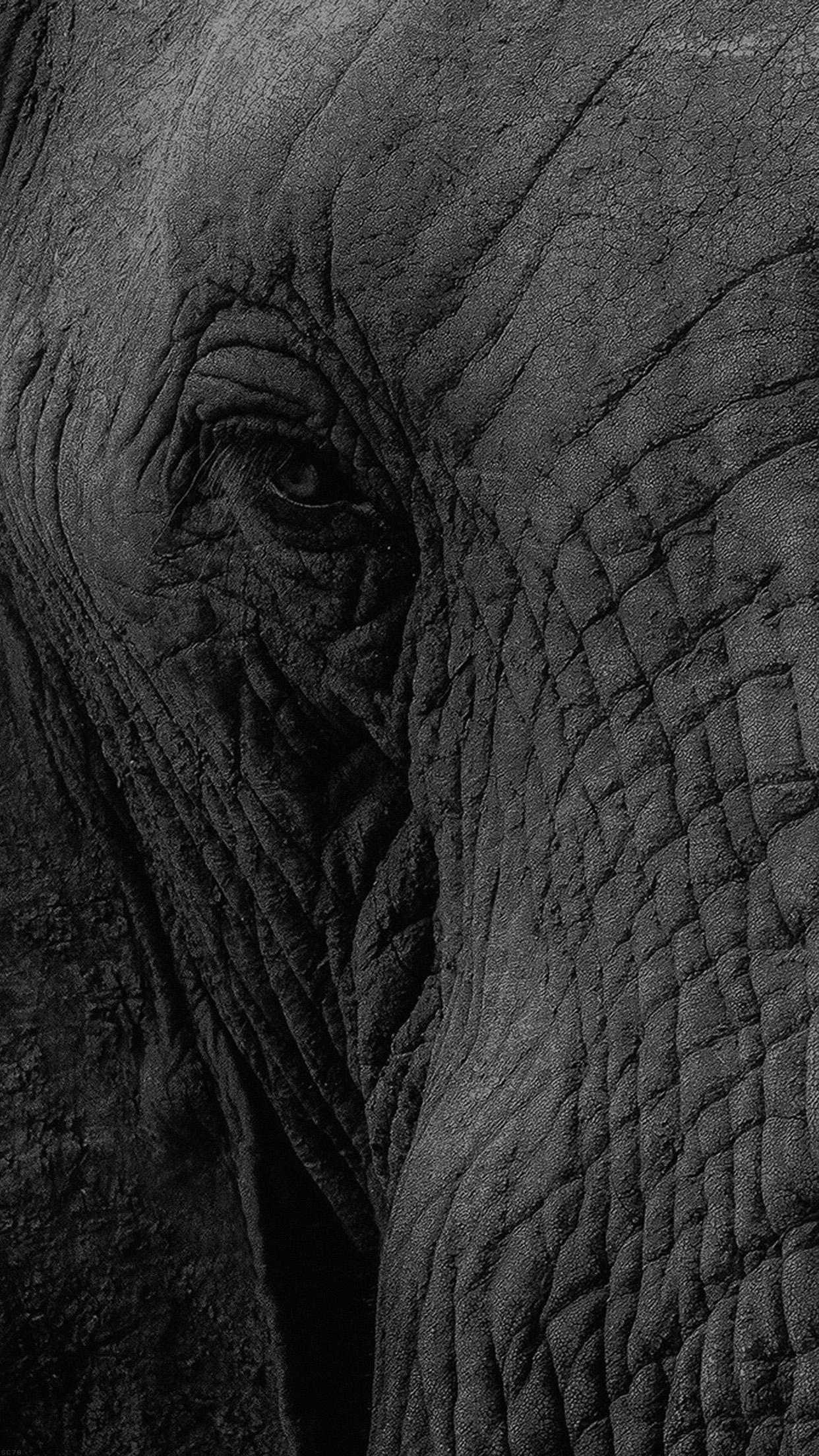 Mh89 elephant eye animal nature - Elephant background iphone ...