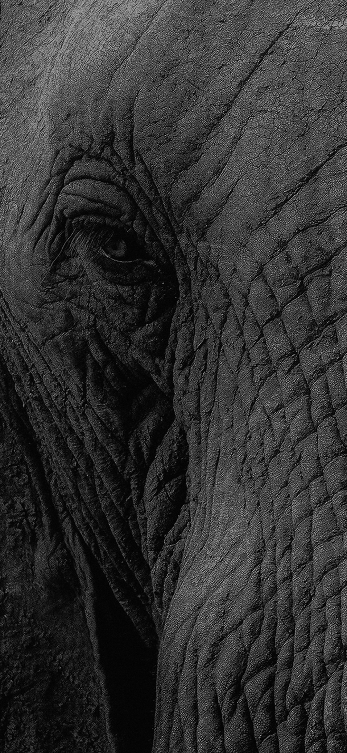 iPhoneXpapers.com-Apple-iPhone-wallpaper-mh89-elephant-eye-animal-nature
