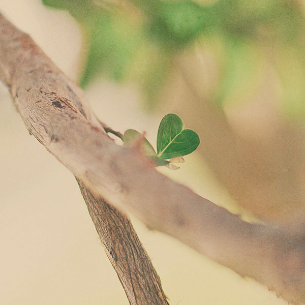iPapers.co-Apple-iPhone-iPad-Macbook-iMac-wallpaper-mh90-fresh-leafs-tree-heart-wallpaper