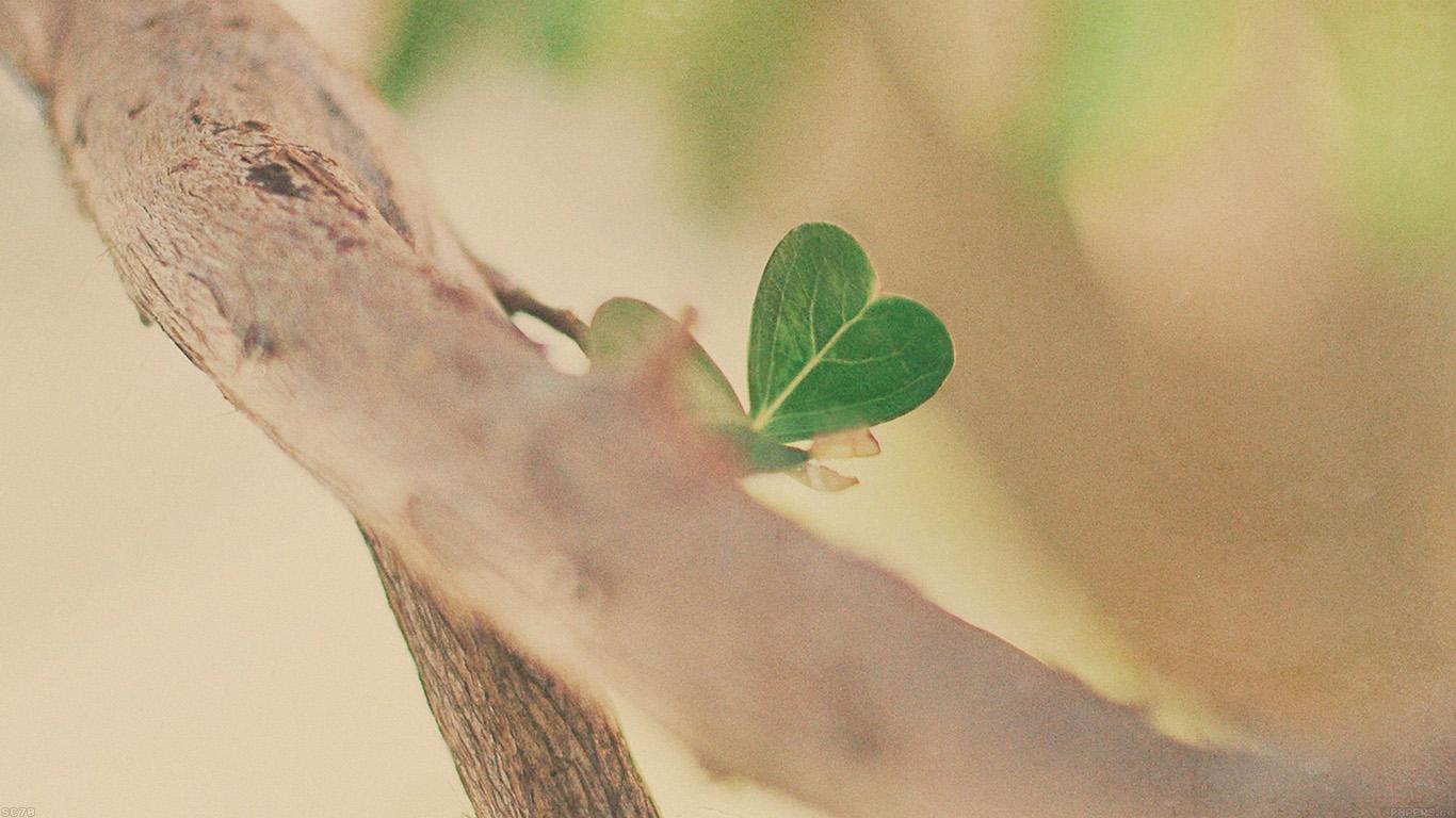desktop-wallpaper-laptop-mac-macbook-airmh90-fresh-leafs-tree-heart-wallpaper