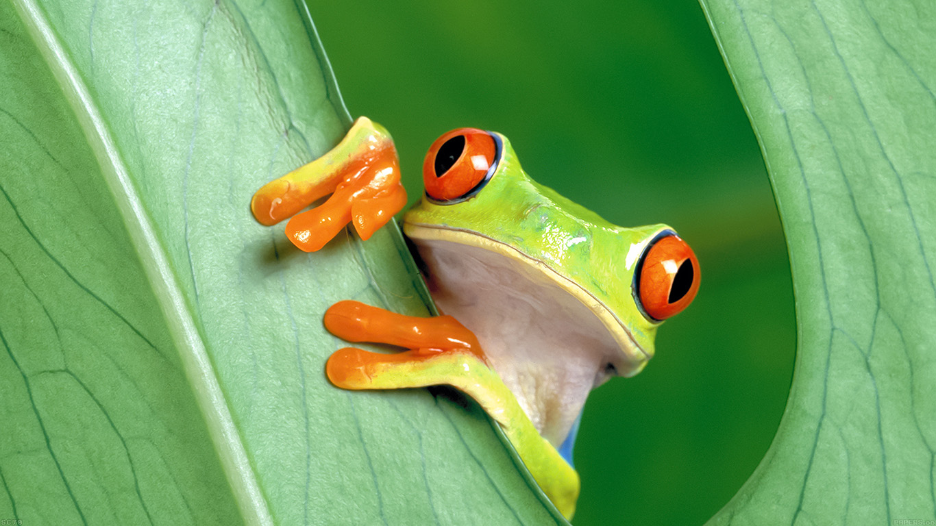 iPapers.co-Apple-iPhone-iPad-Macbook-iMac-wallpaper-mh91-frog-leaf-nature-wallpaper