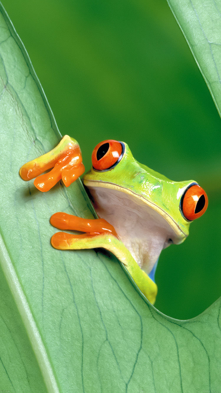 iPhone6papers.co-Apple-iPhone-6-iphone6-plus-wallpaper-mh91-frog-leaf-nature