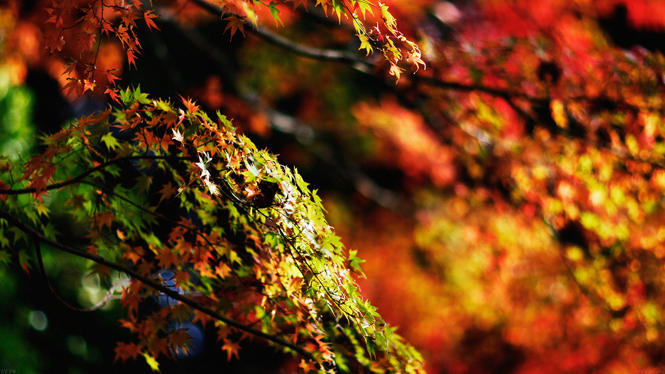 iPapers.co-Apple-iPhone-iPad-Macbook-iMac-wallpaper-mh97-japanese-maple-tree-fall-nature-wallpaper