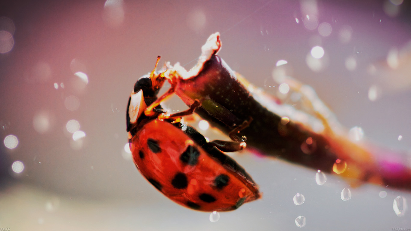 iPapers.co-Apple-iPhone-iPad-Macbook-iMac-wallpaper-mh99-lady-bug-macro-zoom-animal-wallpaper