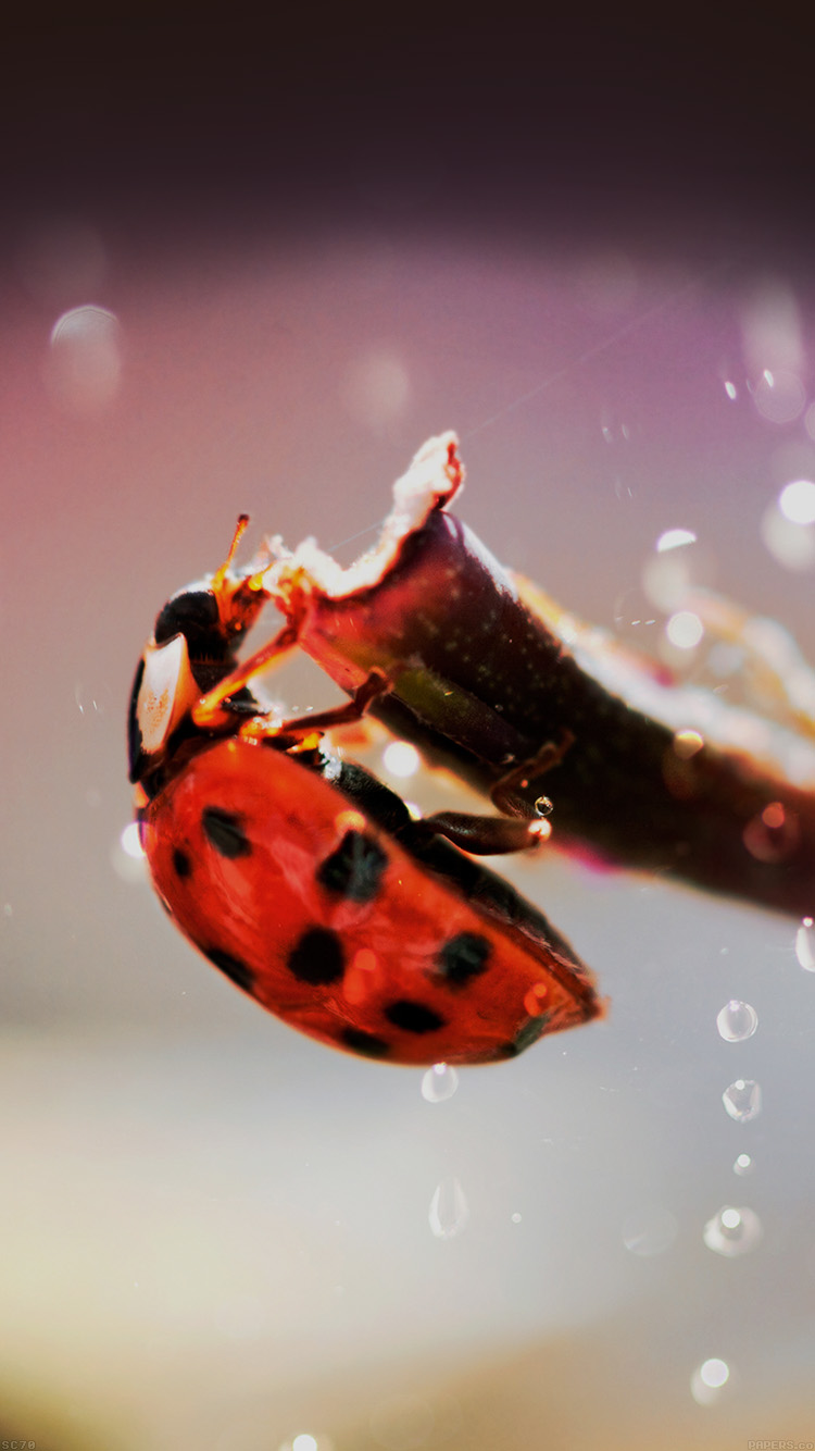 iPhone6papers.co-Apple-iPhone-6-iphone6-plus-wallpaper-mh99-lady-bug-macro-zoom-animal