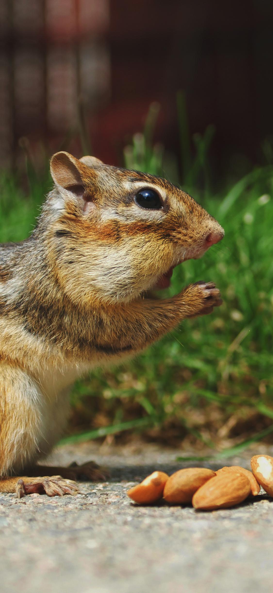 iPhoneXpapers.com-Apple-iPhone-wallpaper-mi27-chipmunk-eating-surprised-nature-animal