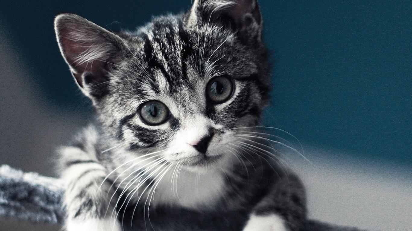 iPapers.co-Apple-iPhone-iPad-Macbook-iMac-wallpaper-mi35-cute-cat-look-animal-love-nature-wallpaper