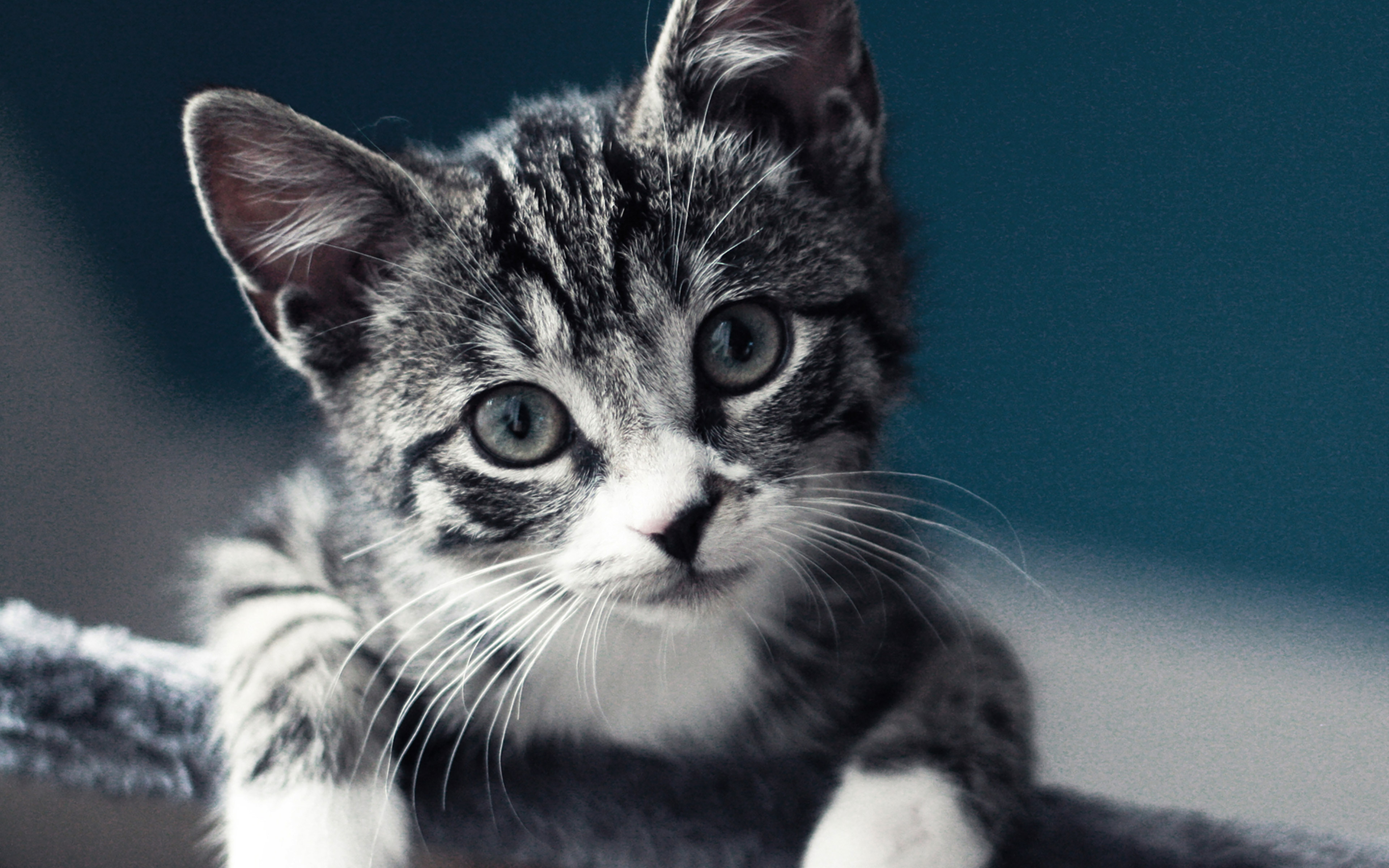 Top Wallpaper Macbook Cat - papers  HD_895677.jpg