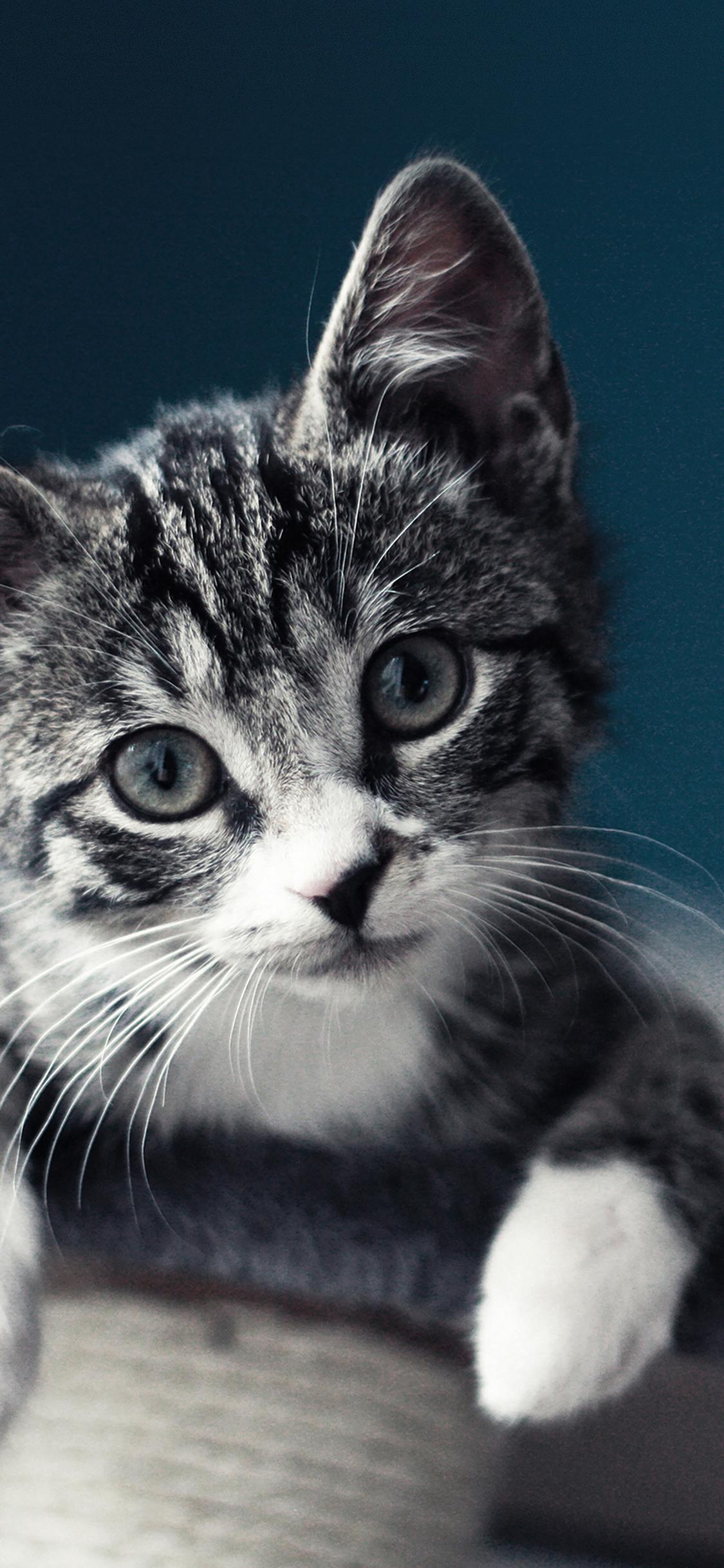 iPhoneXpapers.com-Apple-iPhone-wallpaper-mi35-cute-cat-look-animal-love-nature