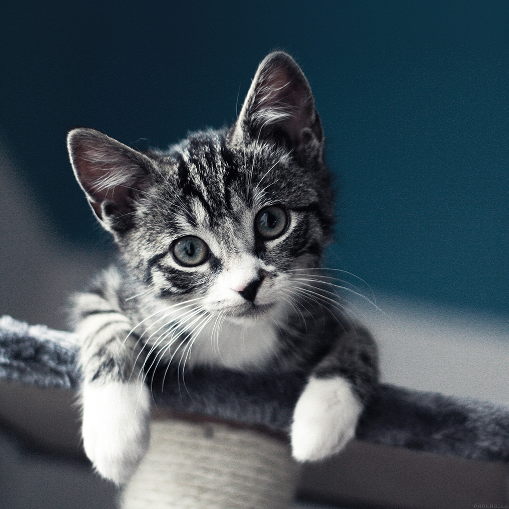 android-wallpaper-mi35-cute-cat-look-animal-love-nature-wallpaper