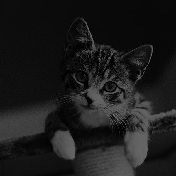 iPapers.co-Apple-iPhone-iPad-Macbook-iMac-wallpaper-mi36-cute-cat-look-dark-bw-animal-love-nature-wallpaper