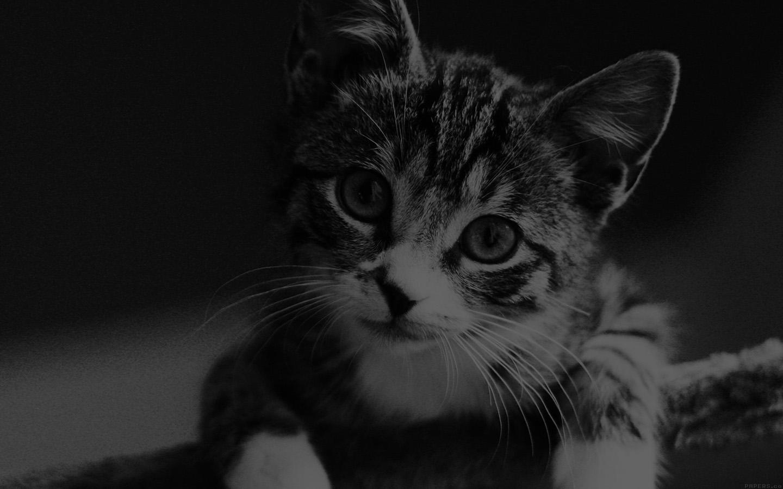 Amazing Wallpaper Macbook Cat - papers  Collection_97759.jpg