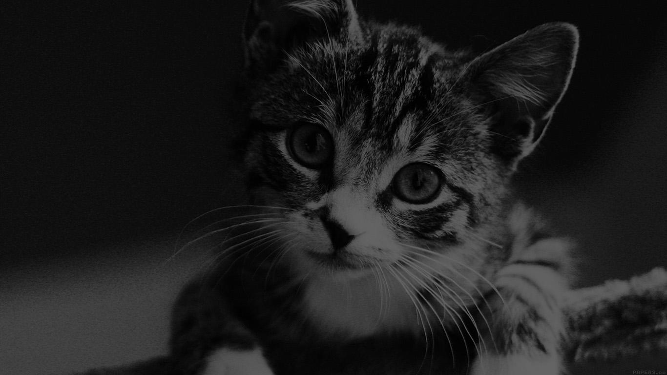 Wallpaper For Desktop Laptop Mi36 Cute Cat Look Dark Bw Animal Love Nature