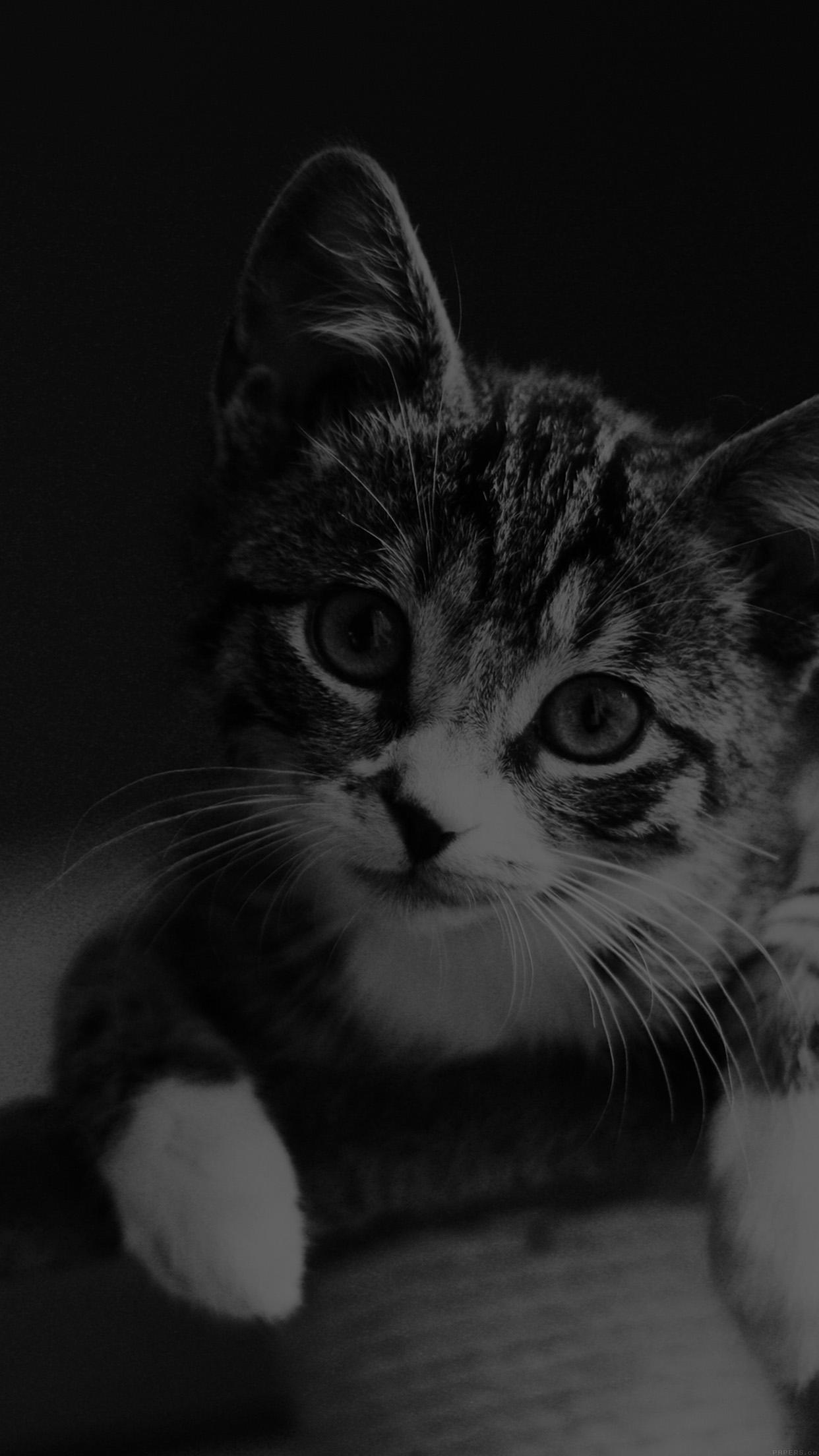Iphonepapers Com Iphone Wallpaper Mi36 Cute Cat Look Dark Bw