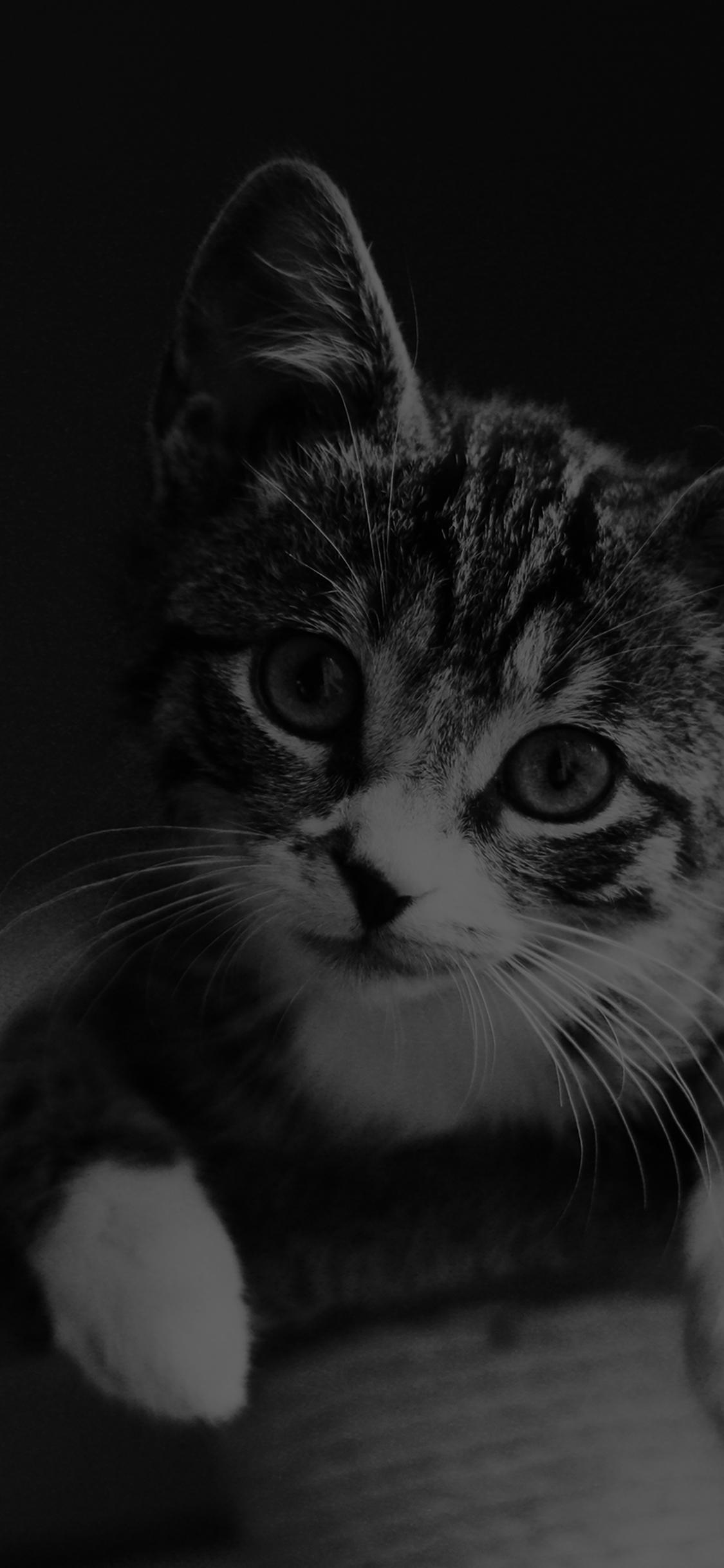 mi36-cute-cat-look-dark-bw-animal-love-nature-wallpaper