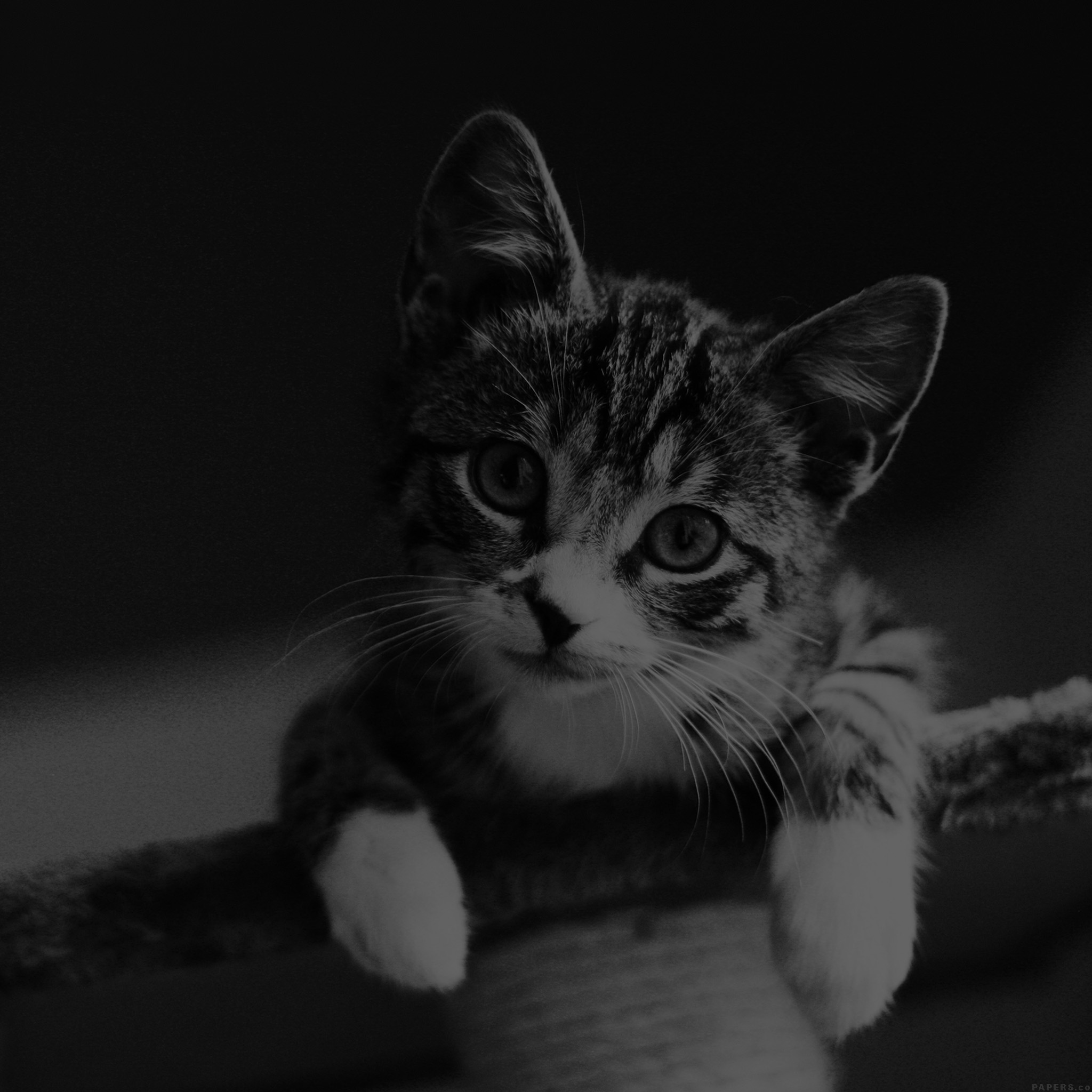 Cat Wallpapers For Iphone: WALLPAPERS