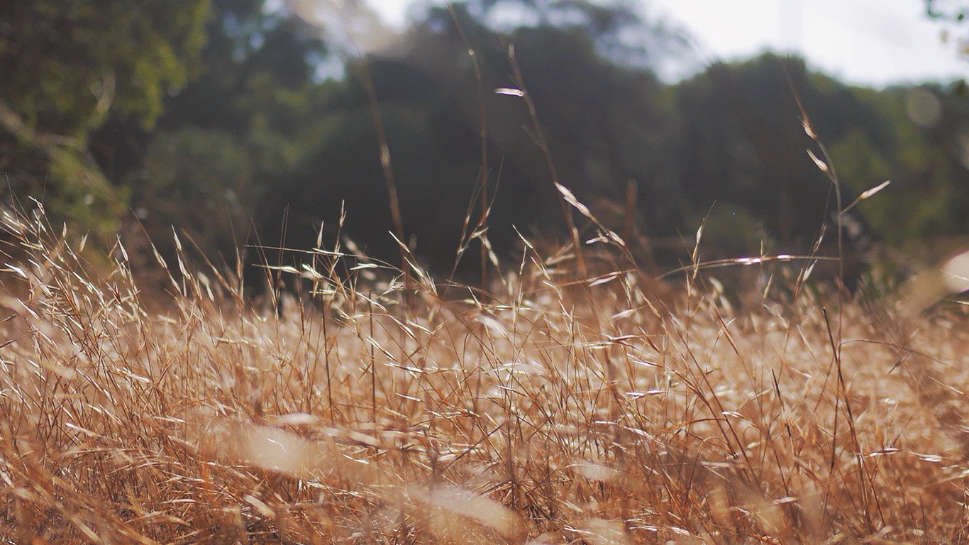 iPapers.co-Apple-iPhone-iPad-Macbook-iMac-wallpaper-mi40-rye-grass-field-mountain-cole-patrick-nature-wallpaper