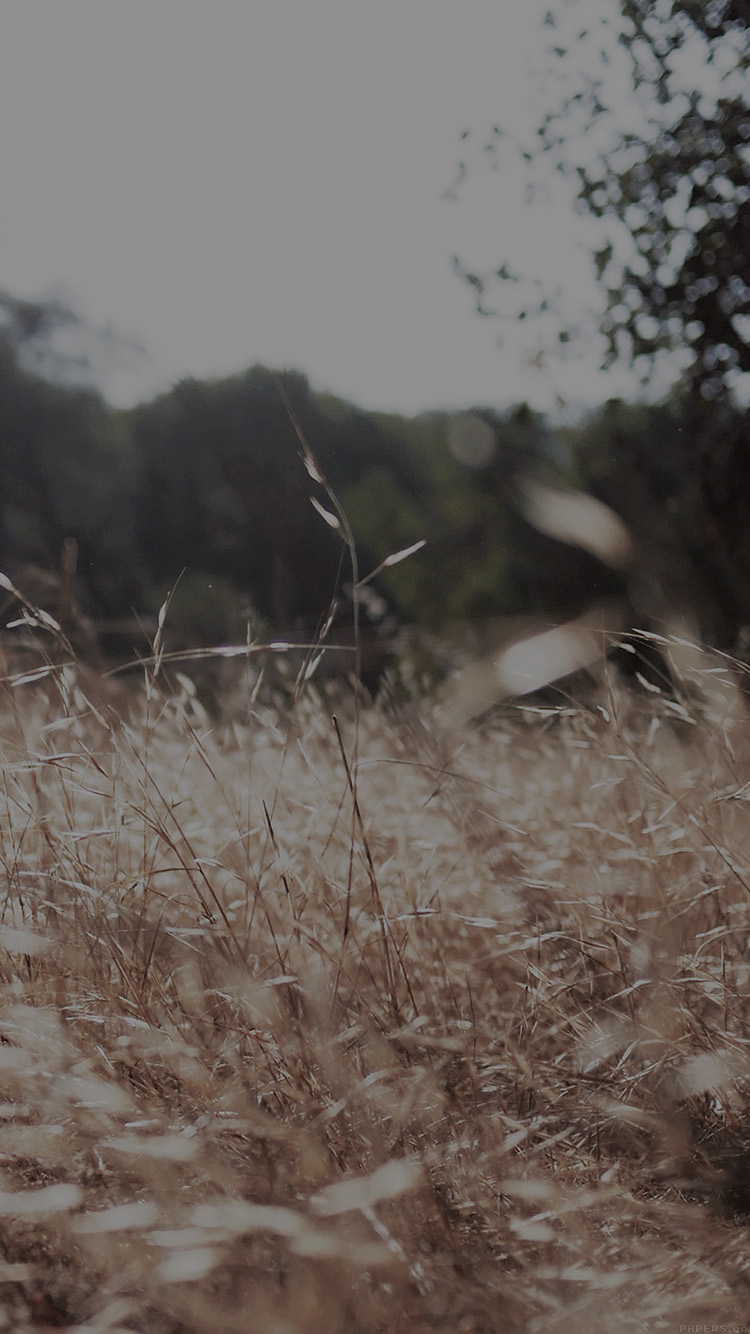 iPhonepapers.com-Apple-iPhone-wallpaper-mi42-rye-grass-field-bokeh-dark-mountain-cole-patrick-nature