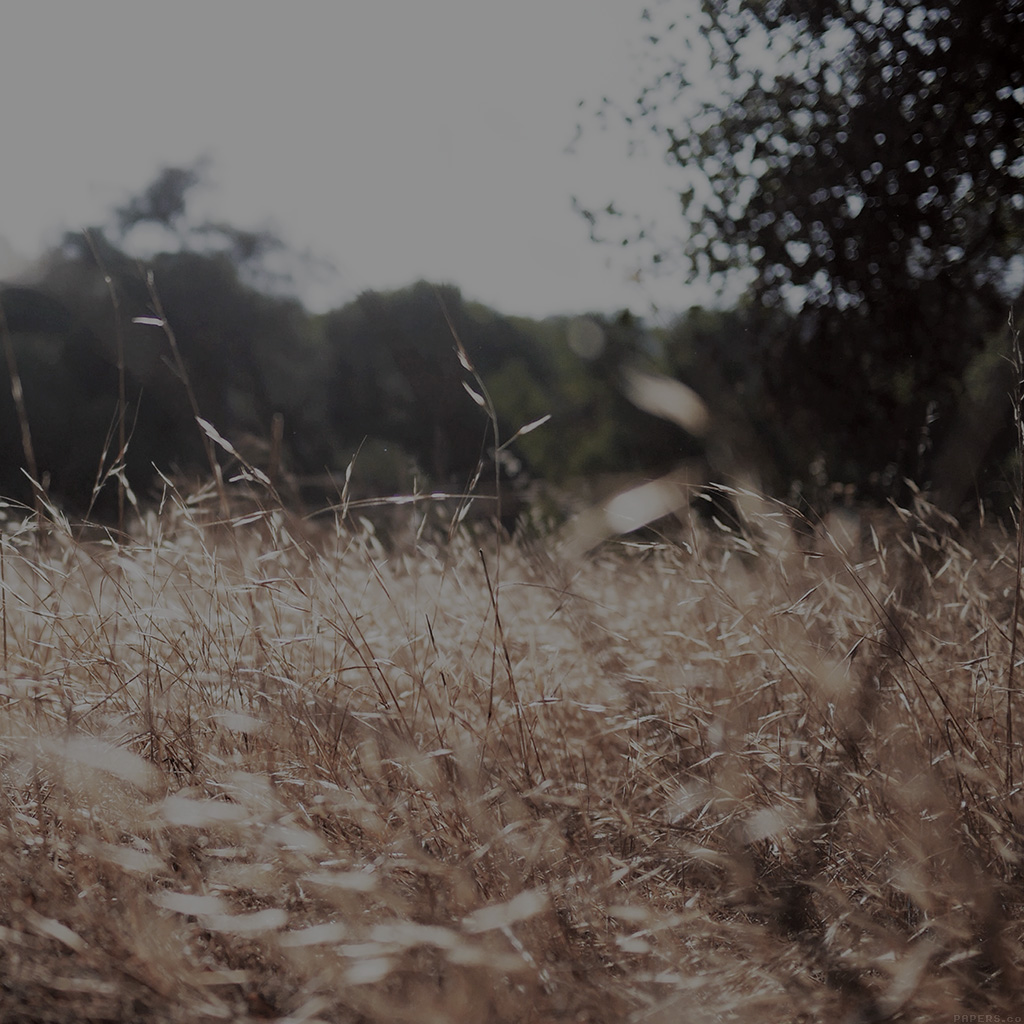 wallpaper-mi42-rye-grass-field-bokeh-dark-mountain-cole-patrick-nature-wallpaper