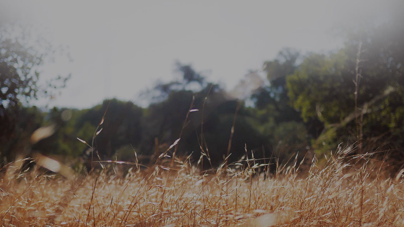 iPapers.co-Apple-iPhone-iPad-Macbook-iMac-wallpaper-mi43-rye-grass-field-bokeh-cool-mountain-cole-patrick-nature-wallpaper