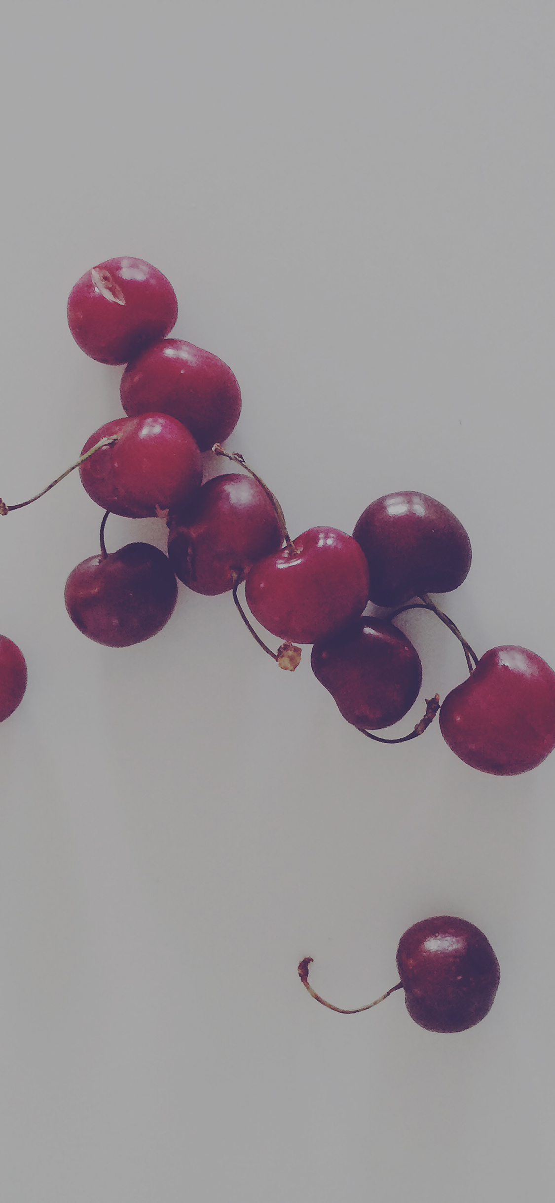 iPhoneXpapers.com-Apple-iPhone-wallpaper-mi50-cherry-red-dark-paula-borowska-fruit-nature