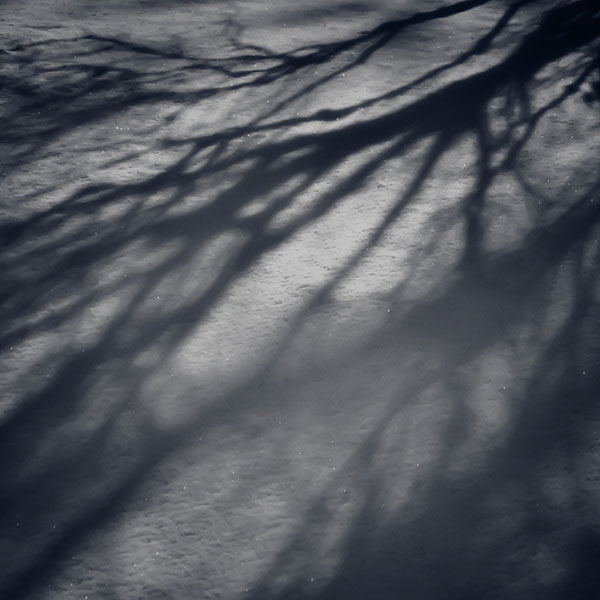 iPapers.co-Apple-iPhone-iPad-Macbook-iMac-wallpaper-mi65-snow-shadow-winter-tree-nature-wallpaper