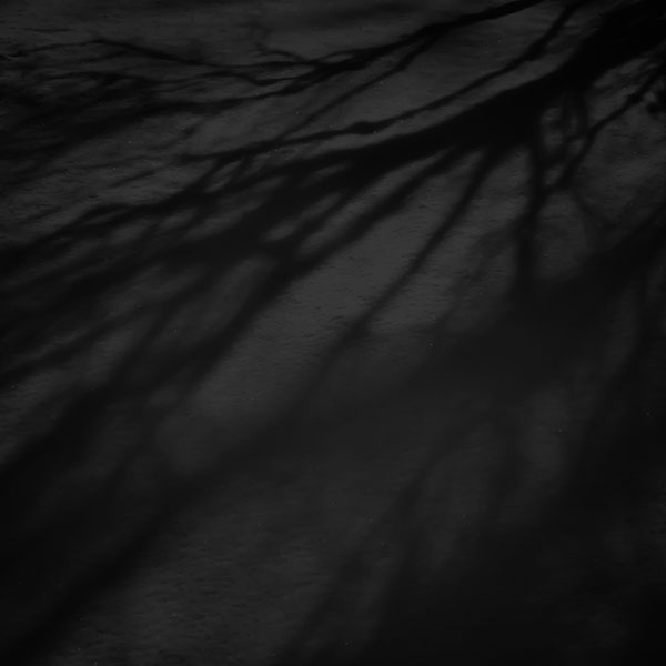 iPapers.co-Apple-iPhone-iPad-Macbook-iMac-wallpaper-mi67-snow-shadow-black-tree-nature-wallpaper