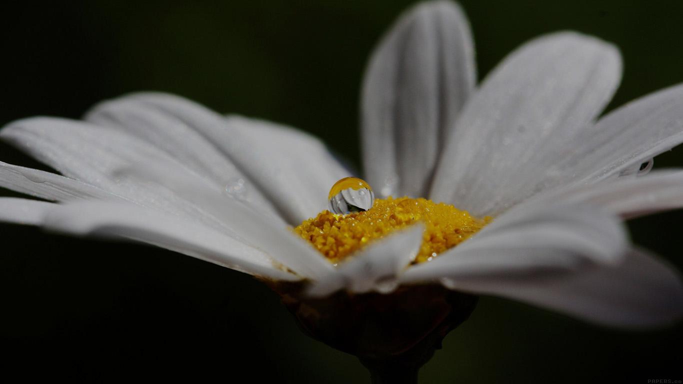 desktop-wallpaper-laptop-mac-macbook-air-mi87-white-flower-yellow-rain-drop-nature-wallpaper