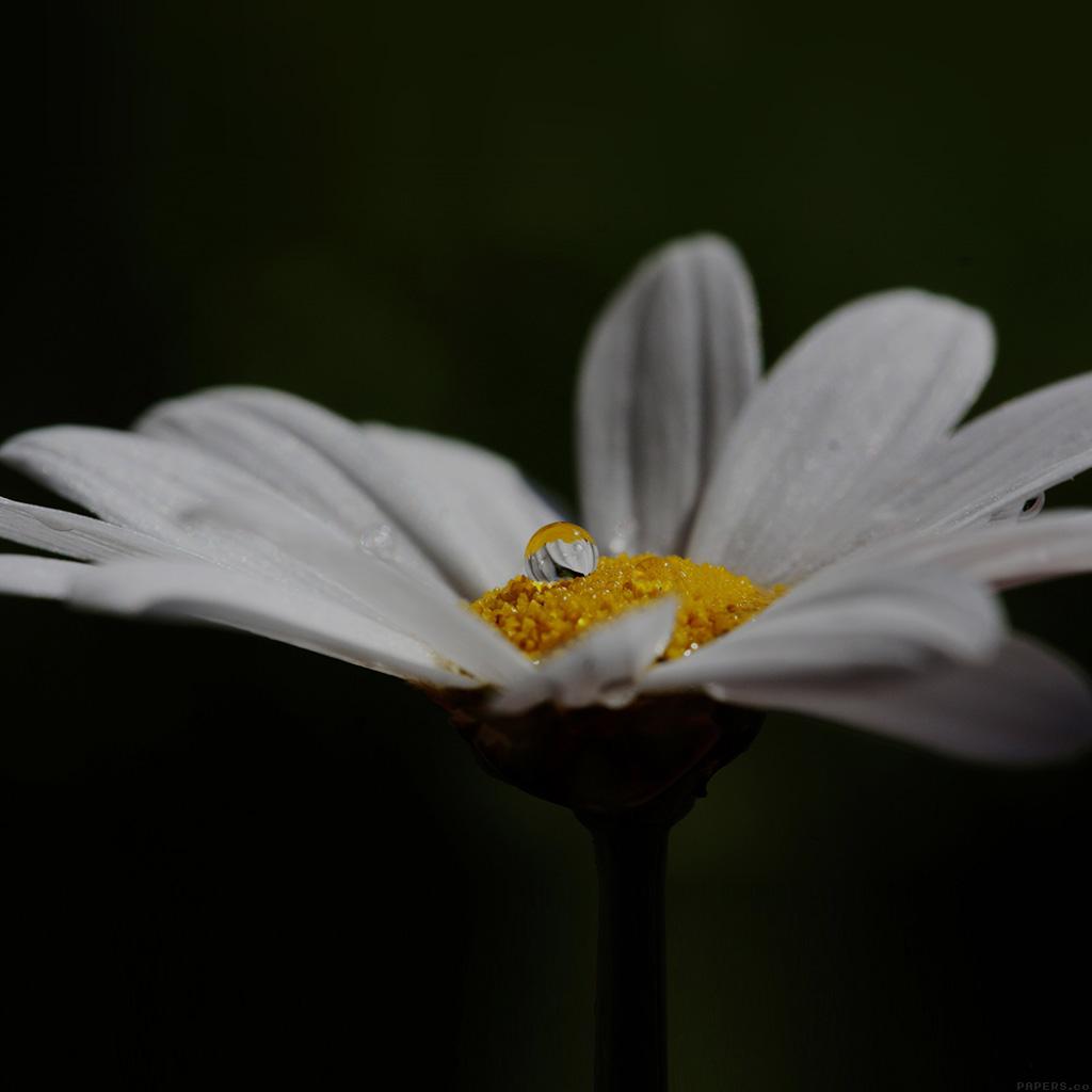 wallpaper-mi87-white-flower-yellow-rain-drop-nature-wallpaper