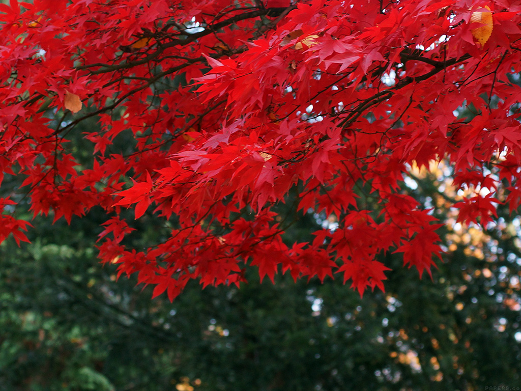 to autumn essays Essay writing guide analysis of keats' to autumn to autumn was a poem composed by john keats, a famous romantic poet who was regarded as a genius by shelly.