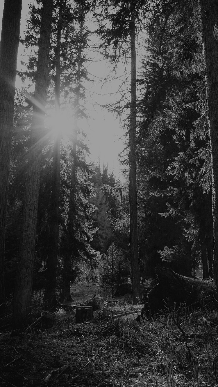 iPhonepapers.com-Apple-iPhone8-wallpaper-mi95-mountain-sunlight-bw-marco-jorger-nature