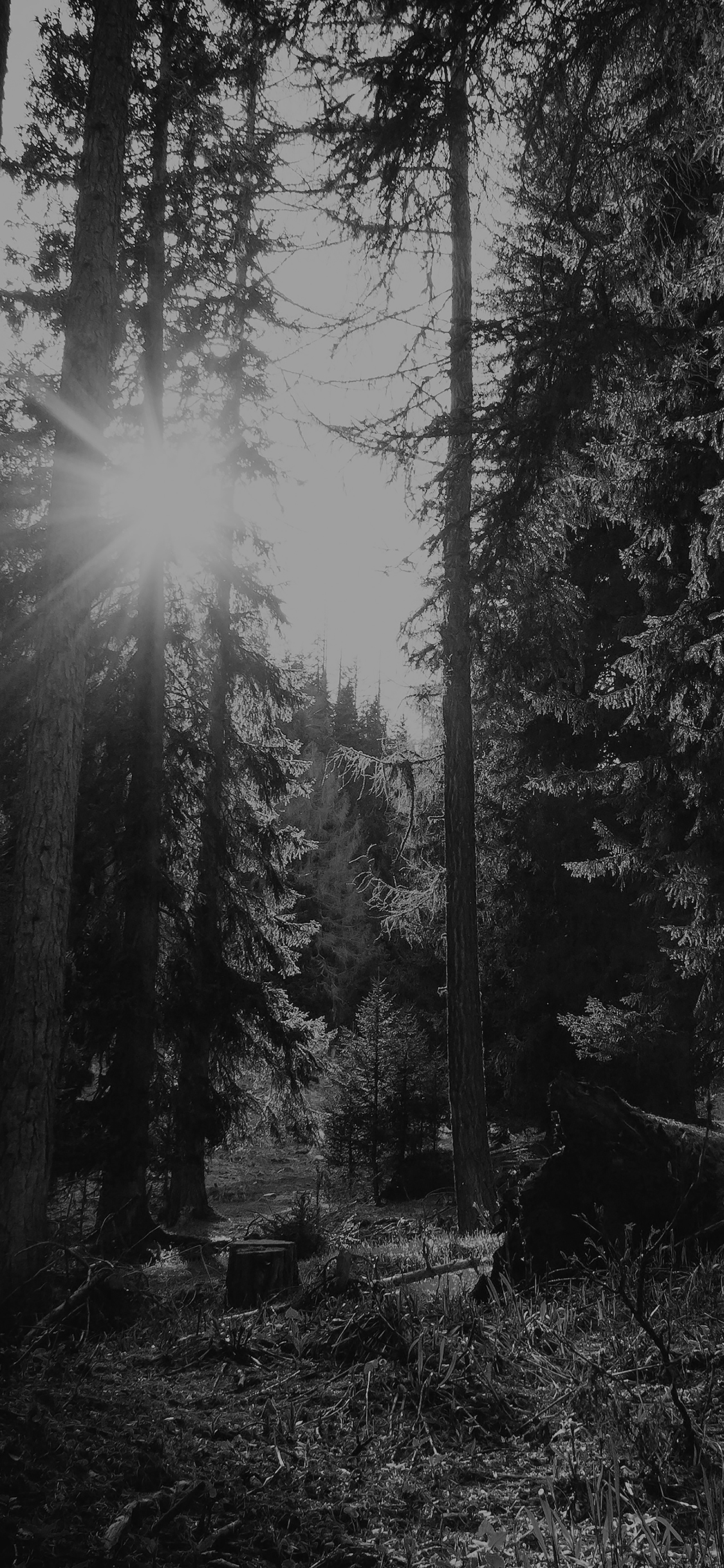 iPhoneXpapers.com-Apple-iPhone-wallpaper-mi95-mountain-sunlight-bw-marco-jorger-nature