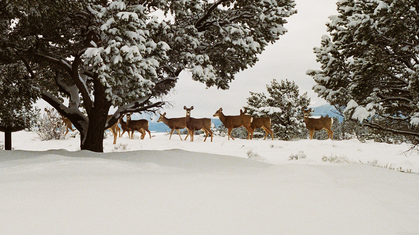 iPapers.co-Apple-iPhone-iPad-Macbook-iMac-wallpaper-mj27-snow-deer-winter-nature-animals-wallpaper