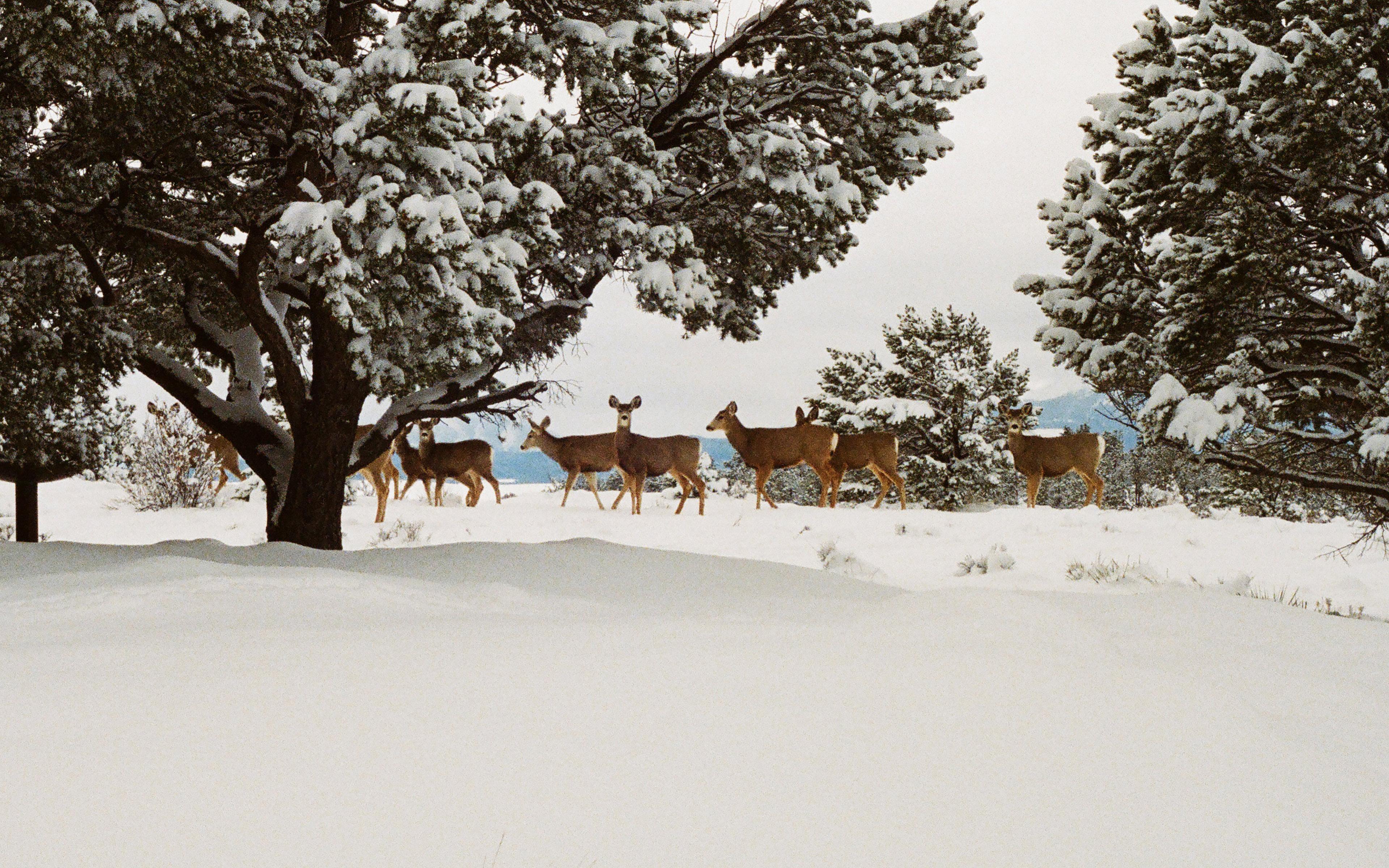 wallpaper for desktop, laptop | mj27-snow-deer-winter ...