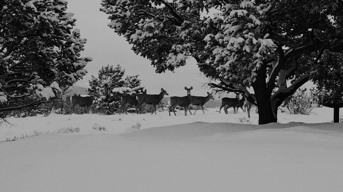 wallpaper-desktop-laptop-mac-macbook-mj28-snow-deer-winter-nature-animals-wallpaper
