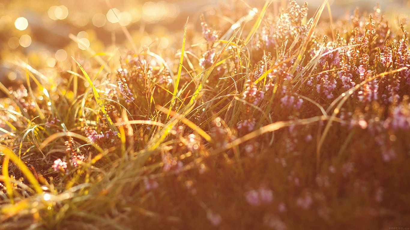 iPapers.co-Apple-iPhone-iPad-Macbook-iMac-wallpaper-mj39-sun-rise-flower-grass-love-nature-wallpaper