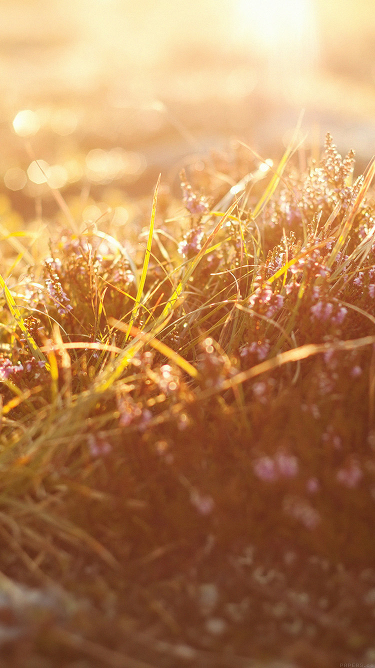 iPhone6papers.co-Apple-iPhone-6-iphone6-plus-wallpaper-mj39-sun-rise-flower-grass-love-nature