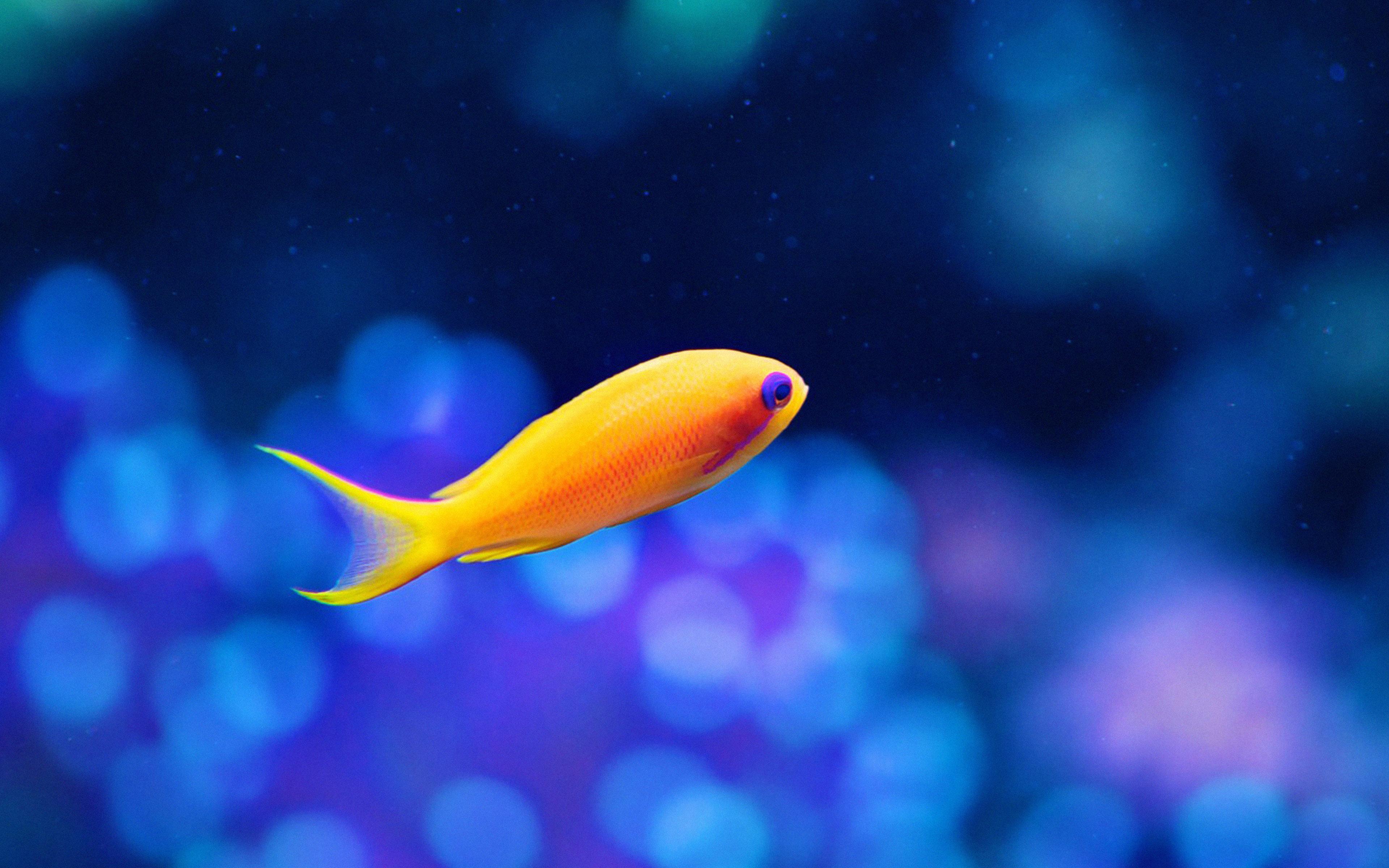 cute fish wallpaper - photo #30