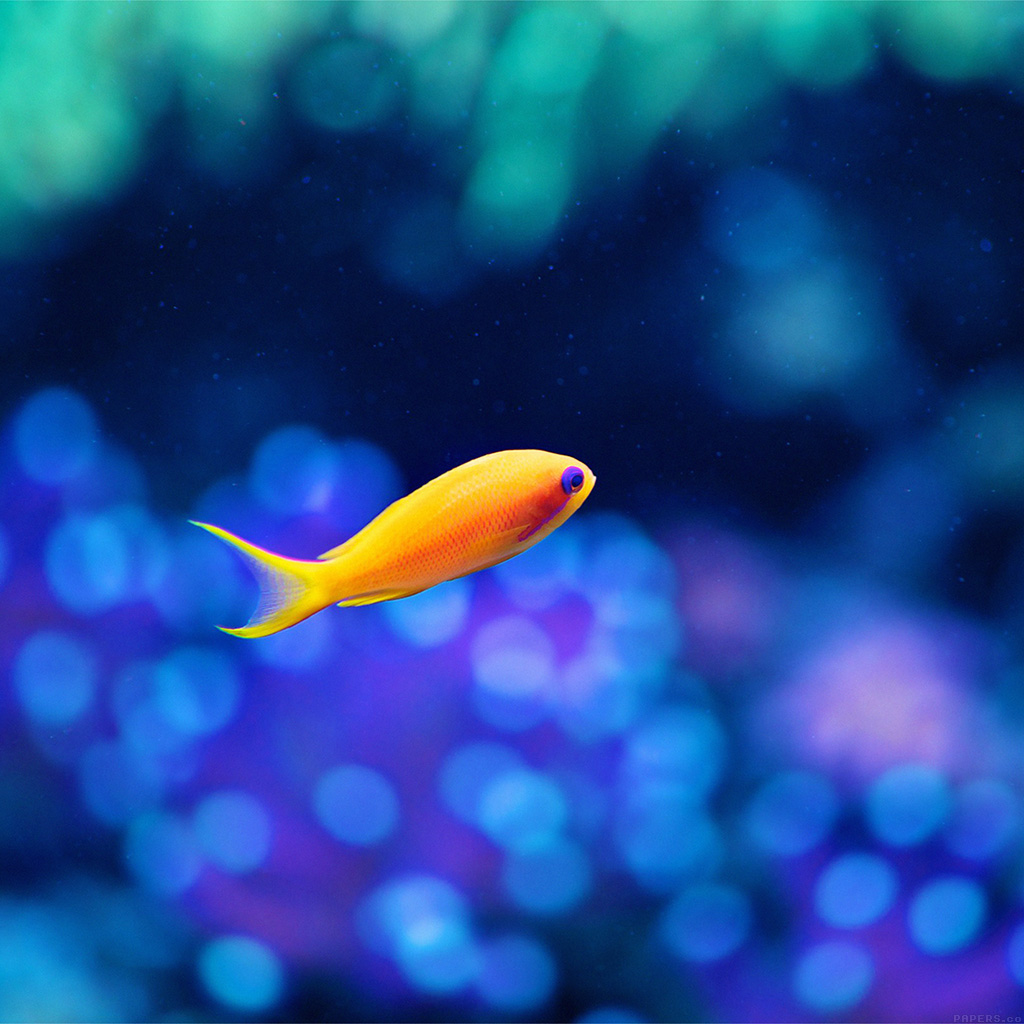 android-wallpaper-mj48-cute-fish-ocean-sea-animal-nature-wallpaper