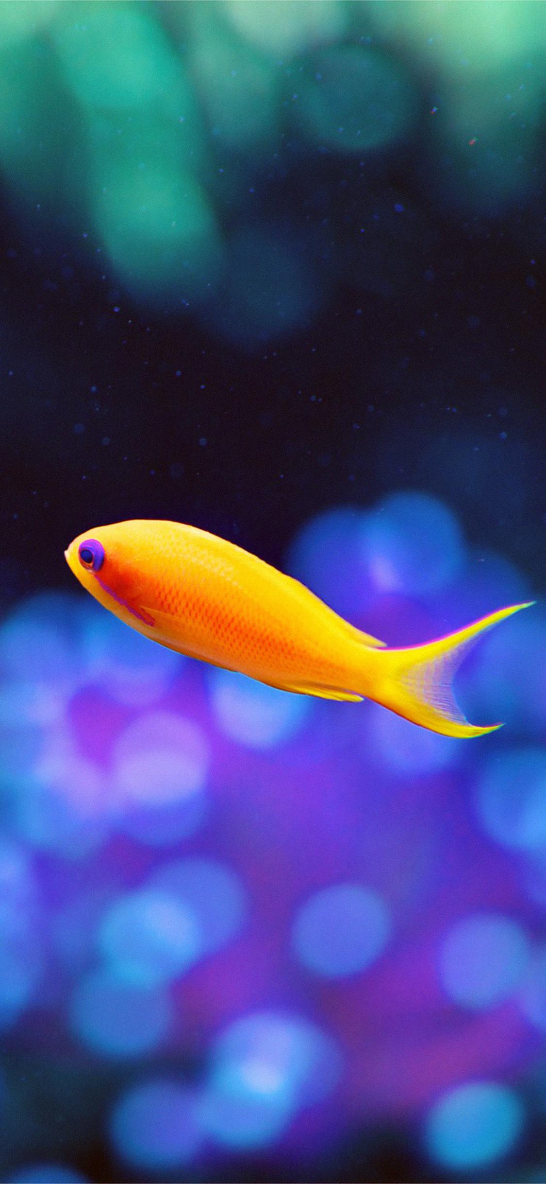 iPhoneXpapers.com-Apple-iPhone-wallpaper-mj49-cute-fish-nemo-ocean-sea-animal-nature